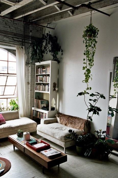 Tangosta roikkuvat kasvit