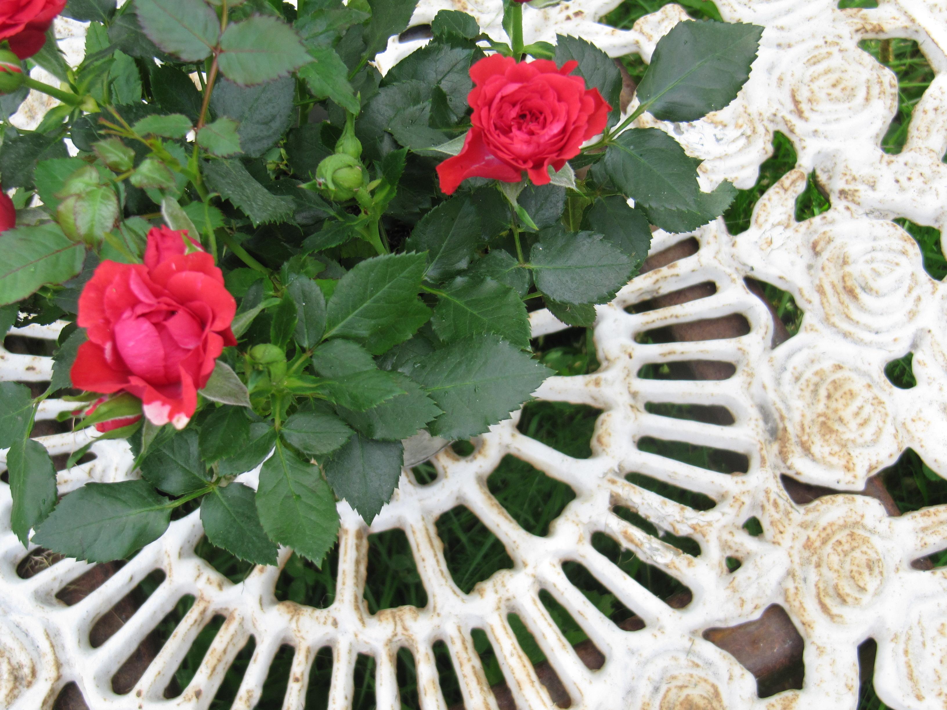 Rautaiset valkoiset puutarhakalusteet