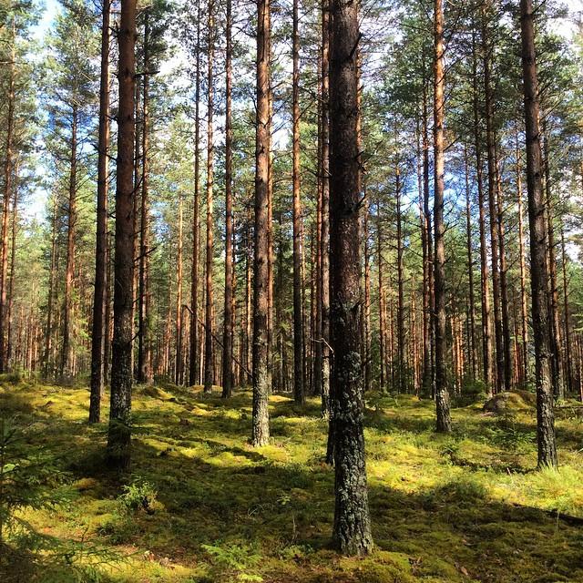 Metsäretki 1