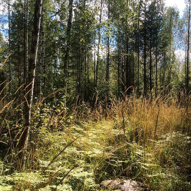 Metsäretki 2