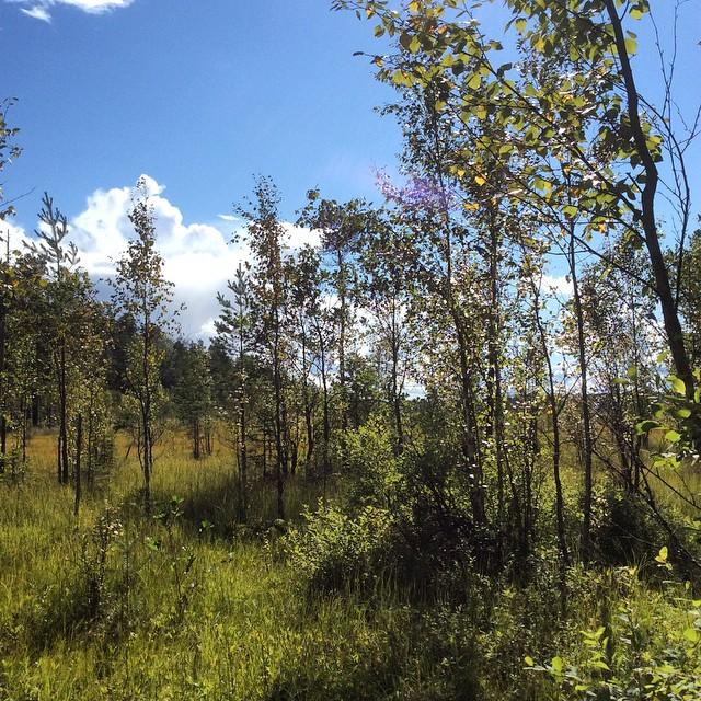 Metsäretki 3