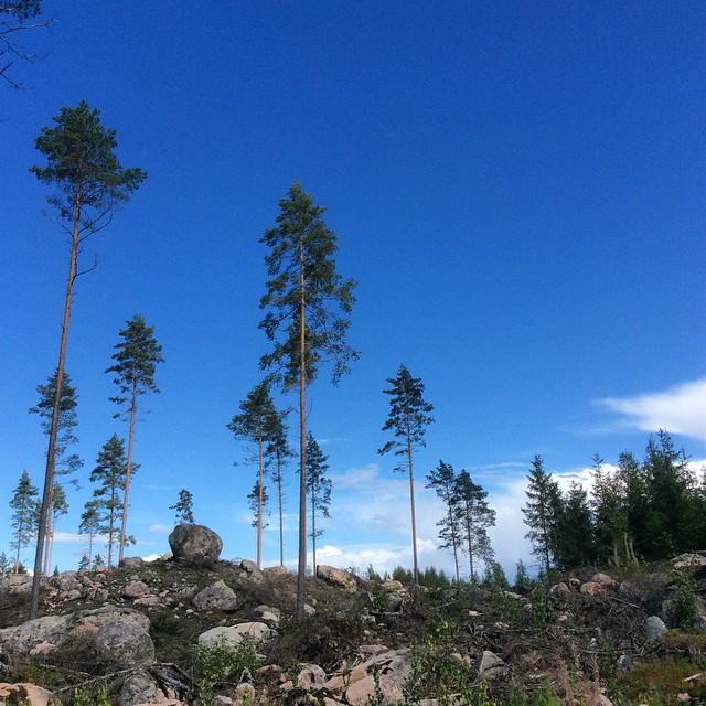 Metsäretki 4