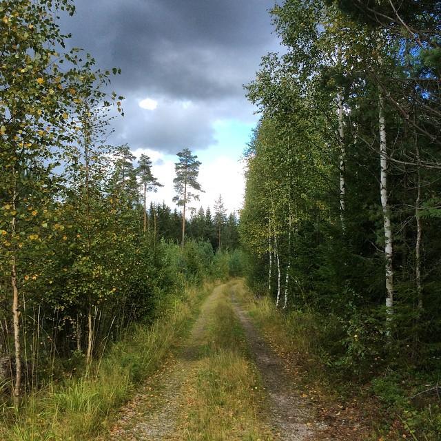 Metsäretki 7